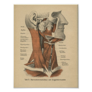 Vintage 1888 German Anatomy Print Face and Neck