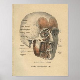 Vintage 1888 German Anatomy Print Face Muscles