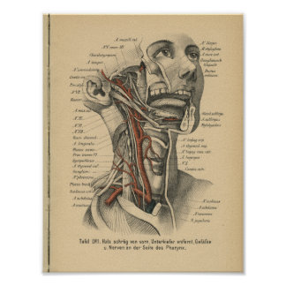 Vintage 1888 German Anatomy Print Face Neck
