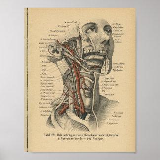 Vintage 1888 German Anatomy Print Face Neck