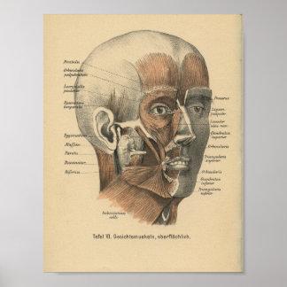 Vintage 1888 German Anatomy Print Facial Muscles