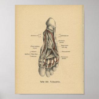 Vintage 1888 German Anatomy Print Foot