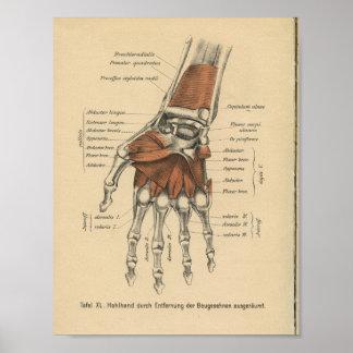 Vintage 1888 German Anatomy Print Hand Wrist