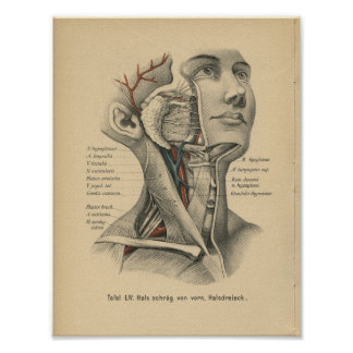 Vintage 1888 German Anatomy Print Head Neck