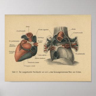 Vintage 1888 German Anatomy Print Heart