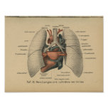 Vintage 1888 German Anatomy Print Heart Lungs