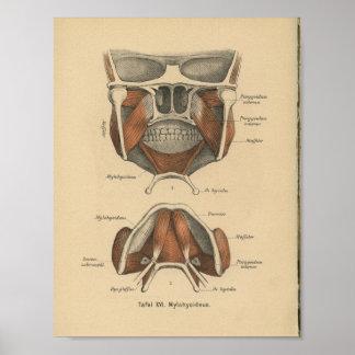 Vintage 1888 German Anatomy Print Jaw