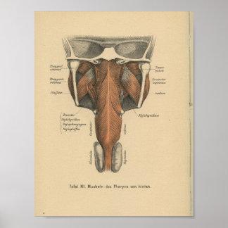 Vintage 1888 German Anatomy Print Pharynx