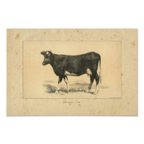 Vintage 1888 Guernsey Cow Print