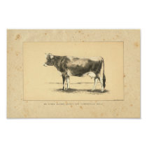 Vintage 1888 Jersey Cow Print