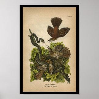 Vintage 1890 Bird Print Brown Thrush