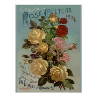 Vintage 1894 Guide to Rose Culture Poster