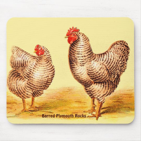 Vintage 1895 BARRED PLYMOUTH ROCK CHICKENS Image Mouse Pad