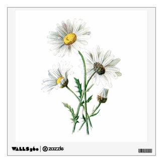 Vintage 1902 Daisies Old Wild Flower Illustration Wall Sticker