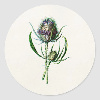 Vintage 1902 Old Scottish Thistle Wild Flower Classic Round Sticker