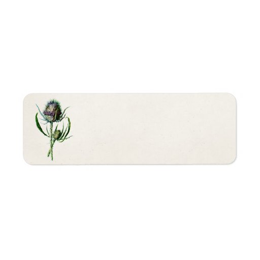 Vintage 1902 Old Scottish Thistle Wild Flower Custom Return Address Label