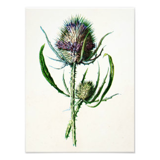 Scottish Thistle by Liam Dobson, available from Liam Dobson Art ...