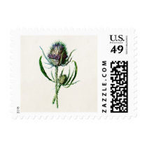 Vintage 1902 Old Scottish Thistle Wild Flower Postage
