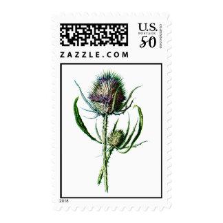 Vintage 1902 Scottish Thistle Antique Wild Flower Postage