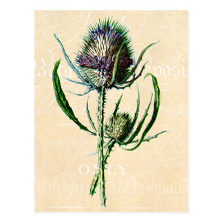 Vintage 1902 Scottish Thistle Antique Wildflower Postcard
