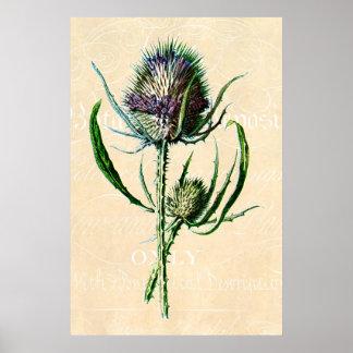 Vintage 1902 Scottish Thistle Antique Wildflower Poster
