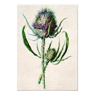 Vintage 1902 Scottish Thistle Old Wild Flower Card