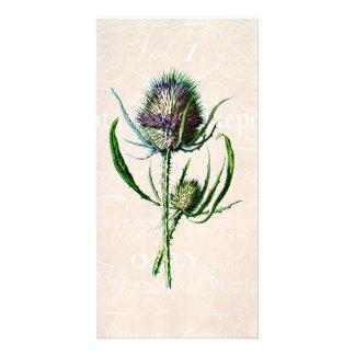 Vintage 1902 Scottish Thistle Old Wild Flower Customized Photo Card