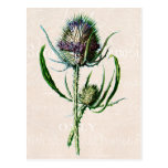 Vintage 1902 Scottish Thistle Old Wild Flower Post Cards