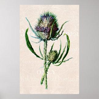 Vintage 1902 Scottish Thistle Old Wild Flower Poster