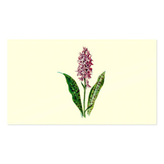 Vintage 1902 Spotted Orchid Wild Flower Orchids Double-Sided Standard Business Cards (Pack Of 100)