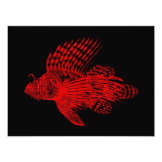 Vintage 1905 Lionfish Scorpionfish Red Lion Fish Photographic Print