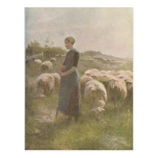 Vintage 1907 Illustration of Sheep in Pasture Postcard