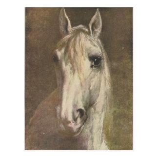 Vintage 1907 Illustration of White Horse Postcard