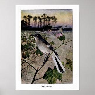 Vintage 1909 birds illustration: mockingbird poster