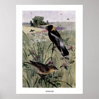 Vintage 1910s birds illustration: bobolink poster