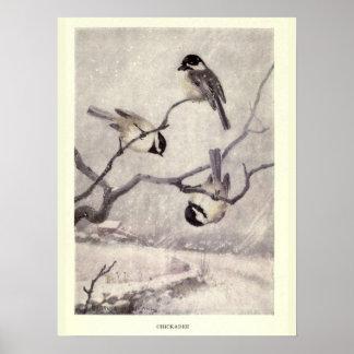 Vintage 1910s birds illustration: Chickadee Poster