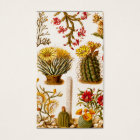 Vintage 1911 Cactus Flower Old Floral Illustration Business Card