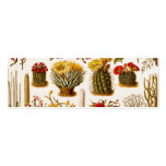 Vintage 1911 Cactus Flower Old Floral Illustration Double-Sided Mini Business Cards (Pack Of 20)