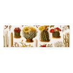 Vintage 1911 Cactus Flower Old Floral Illustration Business Cards