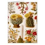 Vintage 1911 Cactus Flower Old Floral Illustration Card