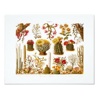 Vintage 1911 Cactus Flower Old Floral Illustration 4.25x5.5 Paper Invitation Card