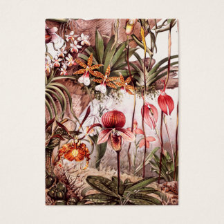 Vintage 1911 Orchid Flower Variety Illustration Business Card