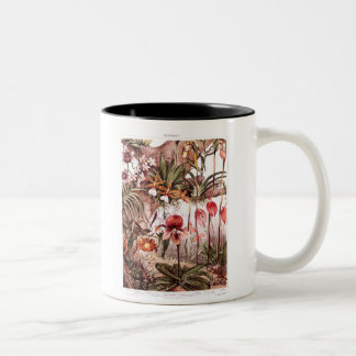 Vintage 1911 Orchid Flower Variety Illustration Two-Tone Coffee Mug