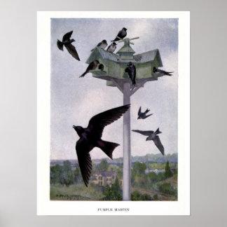 Vintage 1912 birds illustration: purple martin poster