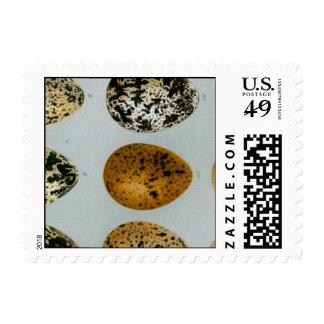 Vintage 19th Century Wild Bird Eggs Bookmark xxxxx Stamps