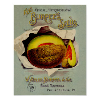 Vintage Advertising Victorian Cantaloupe Fruit Print