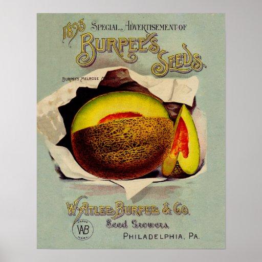 Vintage Advertising Victorian Cantaloupe Fruit Print