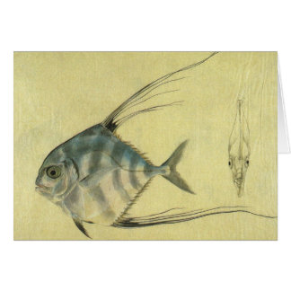 Vintage African Pompano Fish, Threadfin Trevally Greeting Card
