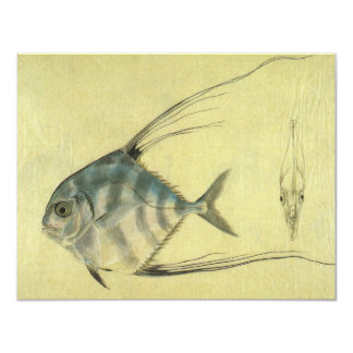 Vintage African Pompano Fish, Threadfin Trevally 4.25x5.5 Paper Invitation Card