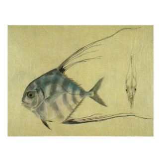 Vintage African Pompano Fish, Threadfin Trevally Print
